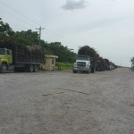 Sugarcane trucks on the road